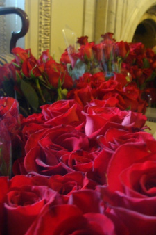 pelosi roses